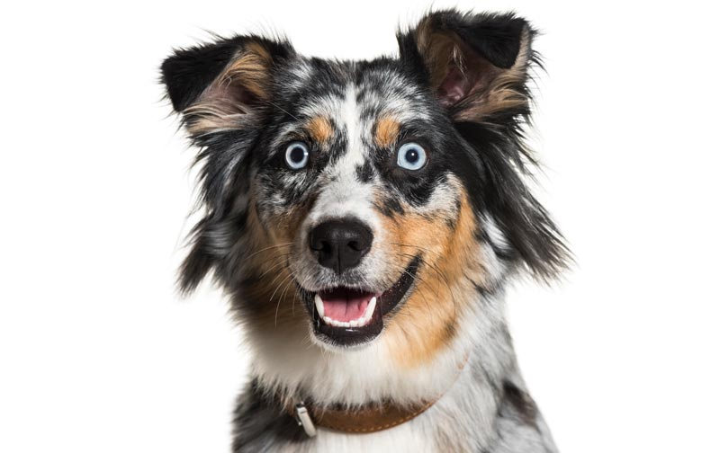 How to Meet a New (Yikes! Hyper) Dog | Preferred Pet Partners